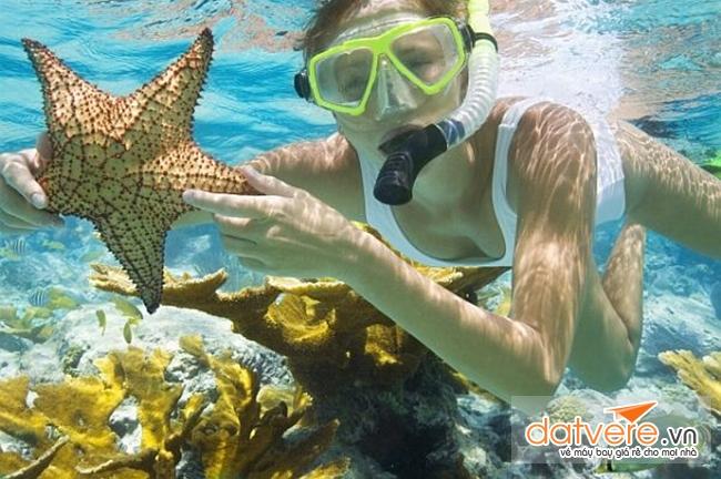 Du lịch Côn Đảo ngắm San Hô tại Hòn Tài