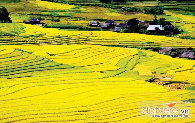 Du lịch điện biên phủ ngắm những cánh đồng Mường Thanh