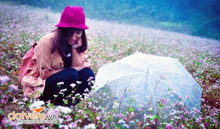 Cánh đồng hoa tam giác mạch Hà Giang