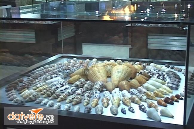 Sò biển ở trong bảo tàng Phuket Thái Lan