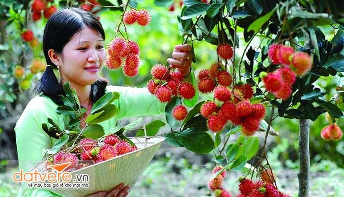 những miệt vườn đầy cây trái luôn khiến du khách thích thú