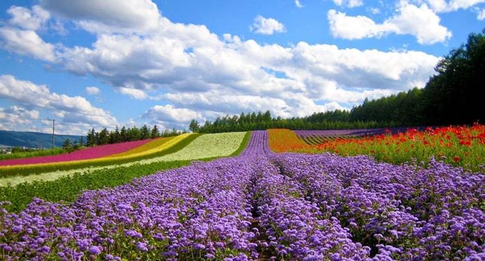 Thung lùng tình yêu ngập tràn sắc hoa
