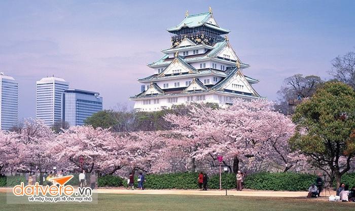 Chiêm ngưỡng vẻ đẹp của lâu đài Osaka