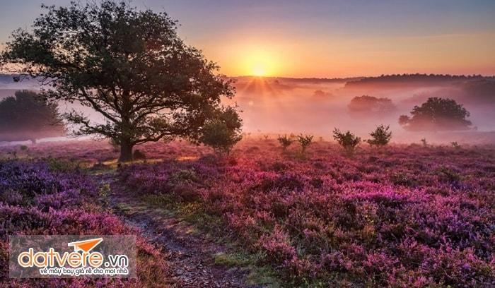 Một cảnh đẹp lãng mạn trong công viên Dwingelderveld