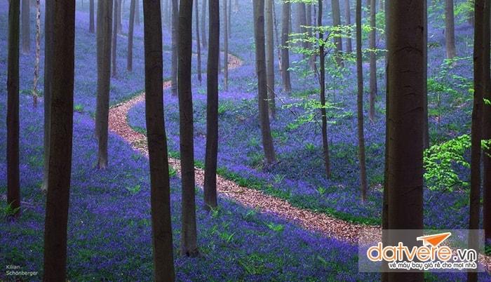 Forest Hallebros, Bỉ