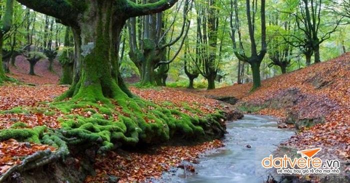 Forest Otzarreta, Tây Ban Nha