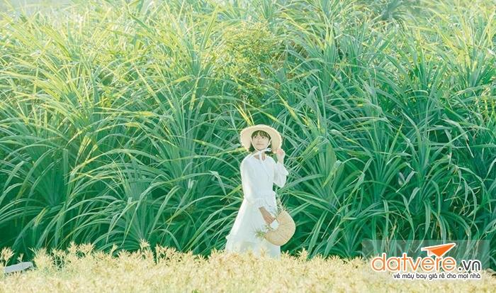 Chụp ảnh sống ảo cực đẹp trên cánh đồng xương rồng