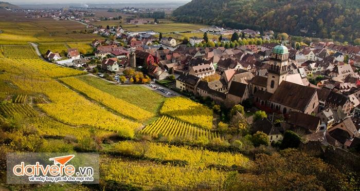 Cánh đồng nho ở Colmar