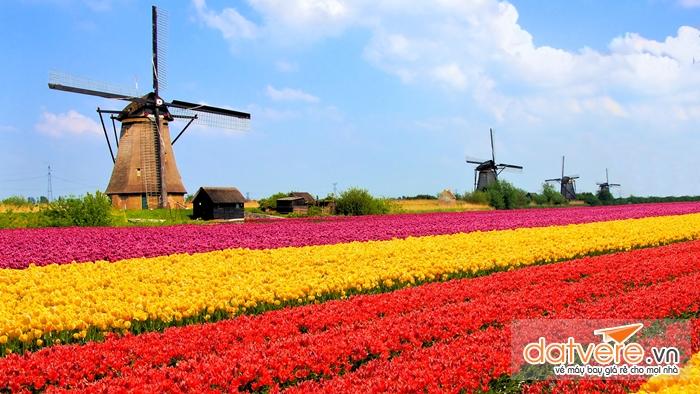 Vườn hoa Tulip ở Hà Lan