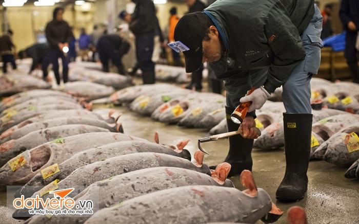Chợ cá ngừ Nhật Bản