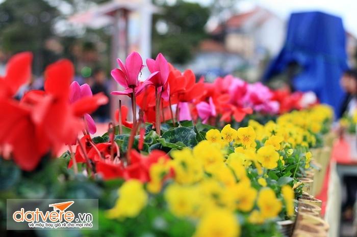 Xứ sở ngàn hoa